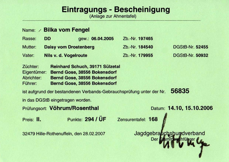 Deutsch Drahthaar Jagdhund Bilka Vom Fengel Mit Ahnentafel